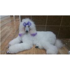 View full profile for Vannas Pups