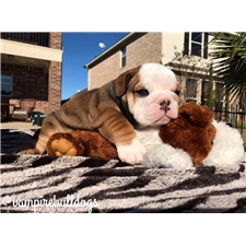 View full profile for Vampire Bulldogs