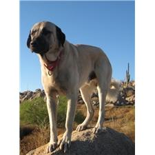 View full profile for Rancholuis