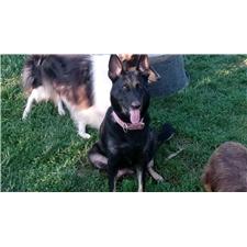 View full profile for Cdherdingdogs