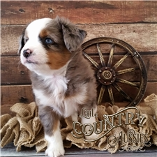 View full profile for Little Country Aussies