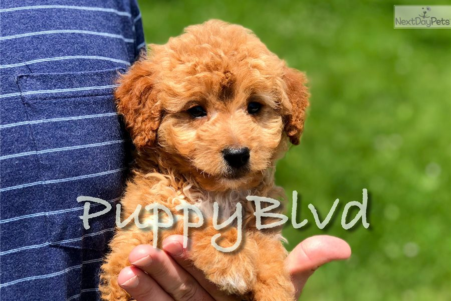 Vet Hypoallergenic Dog Food Medical