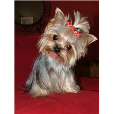 View full profile for Heavenly Yorky