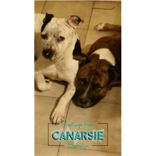 View full profile for Canarsie