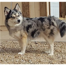 View full profile for Neverland Pomskies