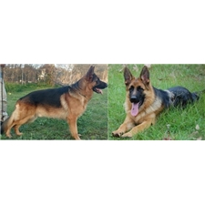 View full profile for Black Cape Canine