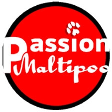 View full profile for Passion Maltipoo