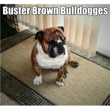 View full profile for Buster Brown Bulldogges