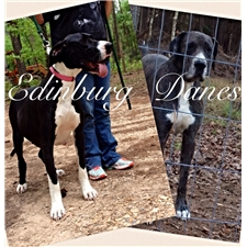 View full profile for Edinburg Danes