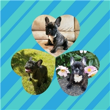 View full profile for Tails And Paws