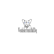View full profile for Westchester French Bulldog