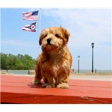 View full profile for Kj Pups