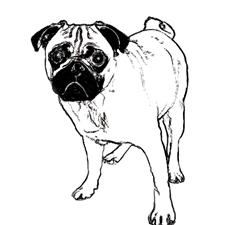 View full profile for Bradley's Pugs