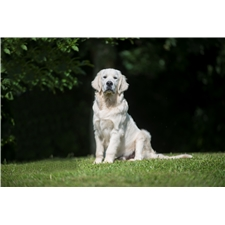 View full profile for Dale Hollow Goldens