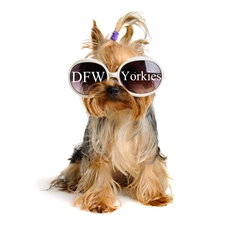 View full profile for Dfw Yorkies