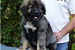 Picture of Caucasian puppy female Tyra