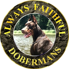 View full profile for Always Faithful Dobermans