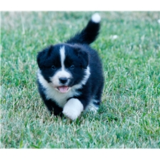 View full profile for Paws & Hooves Border Collie