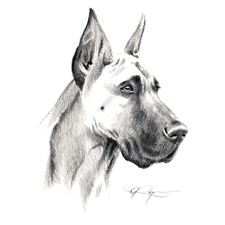 View full profile for Rosa's Great Danes