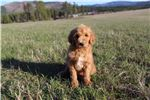Picture of Adorable Puppy With A Bright, Sunny Personality!