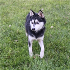 View full profile for Kast Companion Huskies