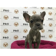 View full profile for Pooch & Groom