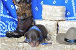 Picture of Eko - Sweet Chocolate and Tan Baby