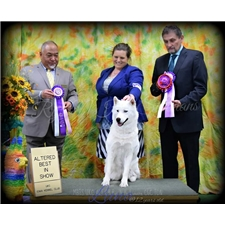 View full profile for Rys N Hy Kennel