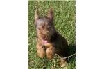 Picture of Otis 2