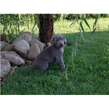 View full profile for Weilein Weims