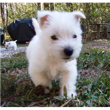 View full profile for Wild Wild Westies