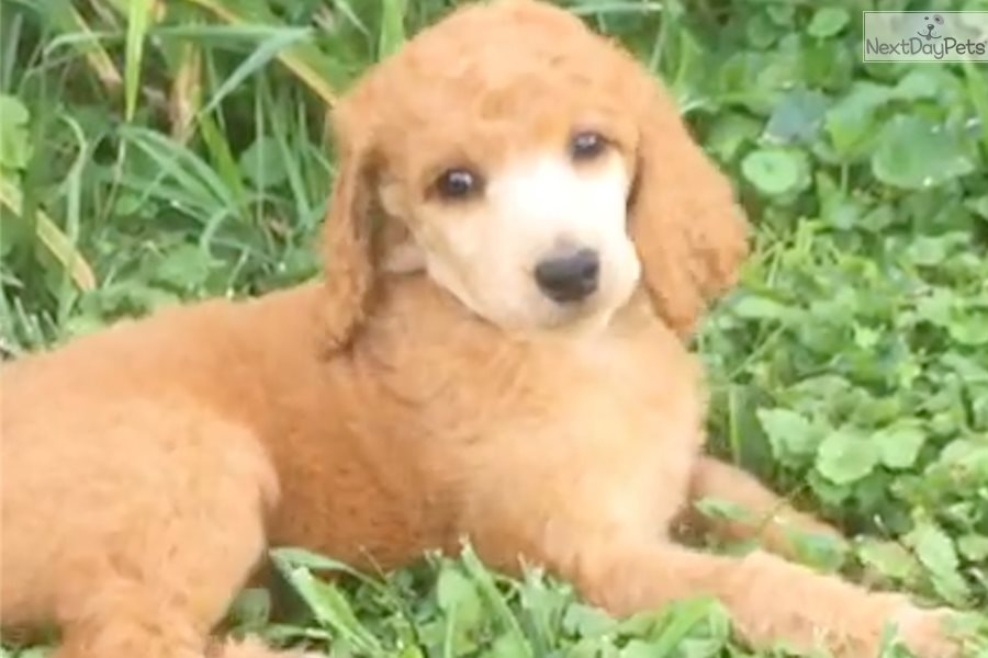 Dogs For Sale Near Mansfield Ohio
