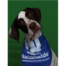 View full profile for Coast Bound German Shorthaired Pointers