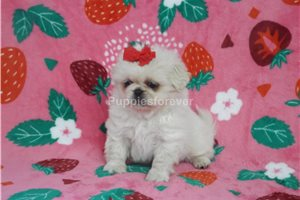 Picture of Gidget