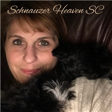 View full profile for Schnauzer Heaven Von Longbach