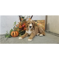 View full profile for Four Corner Puppies