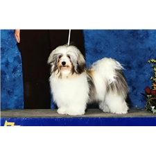 View full profile for Havanese Harbor