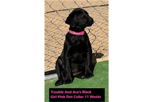 Picture of pink Dot Collar