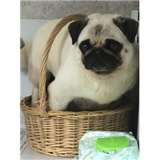 View full profile for King Creek Pugs