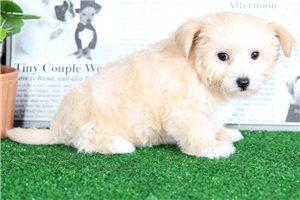 Picture of Pongo