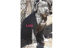 Picture of Lula