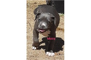 Picture of Moira