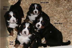 Picture of May litter