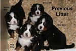 Picture of 2 litters this summer