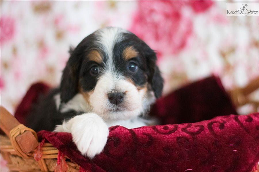Dog Grooming Akron Ohio