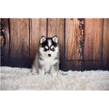 View full profile for Heartland Pomskies