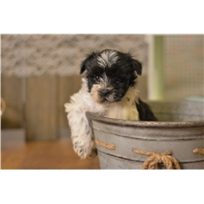 View full profile for Rustic Puppies