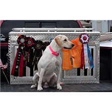 View full profile for Knightlingers Working Dogs