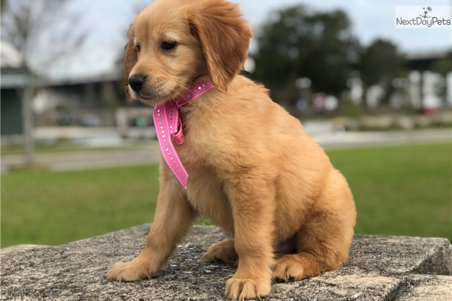 Dog Show In Lakeland Florida