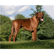 View full profile for Rhoxwood Kennel
